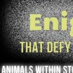 10 Creepy Enigmas That Defy Explanation