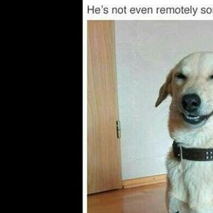 10 Funny Pics Of The Day Featuring Dogs