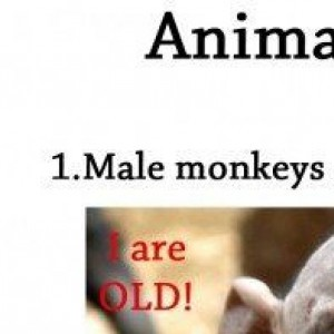 12 Cool Facts All Animal Lovers Should Know
