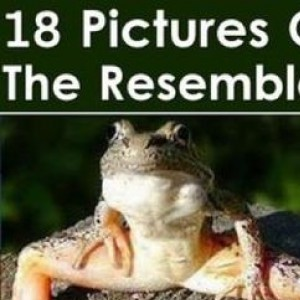 18 Pictures Of The Resemblance Is Uncanny