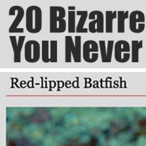20 Really Bizzare Animals You Don't Want As Pets