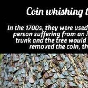A Coin Wishing Tree In UK