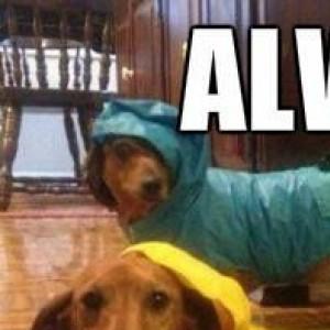 Always cover your wiener..