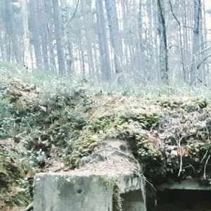 An Old Soviet Bunkers In The Woods.