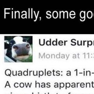An Udder Surprise