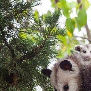 Animals Enjoying Parenthood