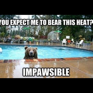At Least You're Not a Polar Bear