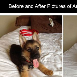 Before and after photos with animals growing up