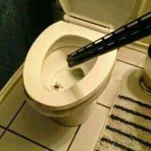 Bye Bye Incy Wincy Spider