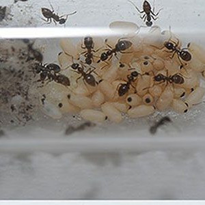 Creating Your Own Ant Army