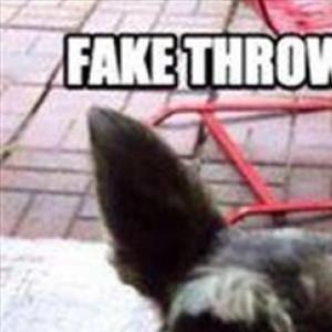 Fake Trow it