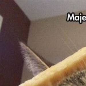 Funny Animals To Get You Through The Day