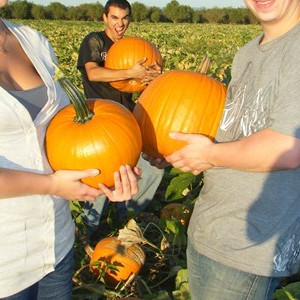 I Have the Biggest Pumpkin Ever