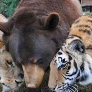 Lions And Tigers And Bears