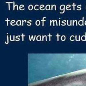 misunderstood sharks
