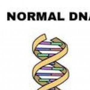 Normal DNA Italian DNA
