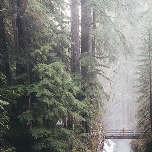 Picture of the day 03: Sol Duc Falls in Olympic National Park