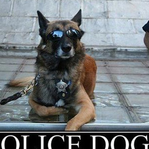 Police Dogs Are Always Ready