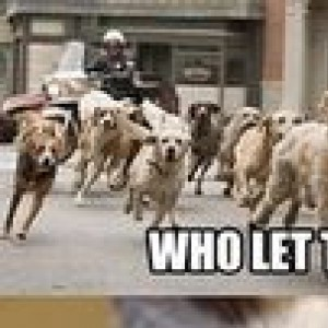 """""""Who let the dogs out!"""""""