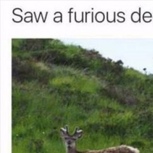 Saw a furious deer in Scotland