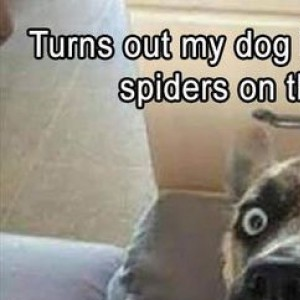 Spiders On The Ceiling Got Me Like...