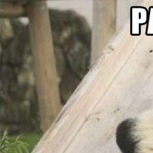 stupid pandas :)