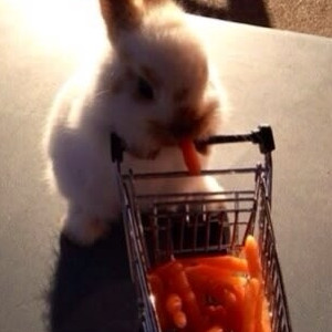 The Day When A Bunny Went To The Grocery Store