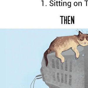 Then vs Meow