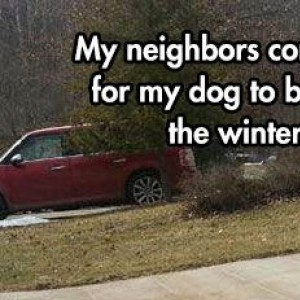 They're Winter Dogs, People