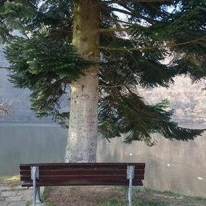 Tree On The Bench