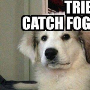 Tried to catch fog, mist