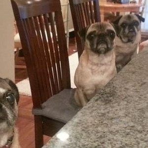 Waiting For The Lunch