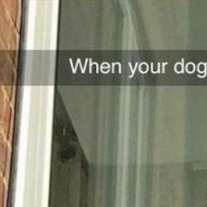 When Your Dog Is Loud But A Good Boy