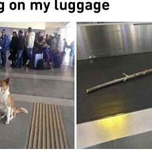 Where Is My Luggage
